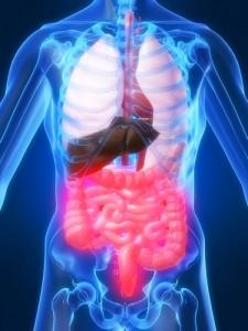 Fucoidans anti-inflammatory benefits help to treat gastrointestinal diseases.